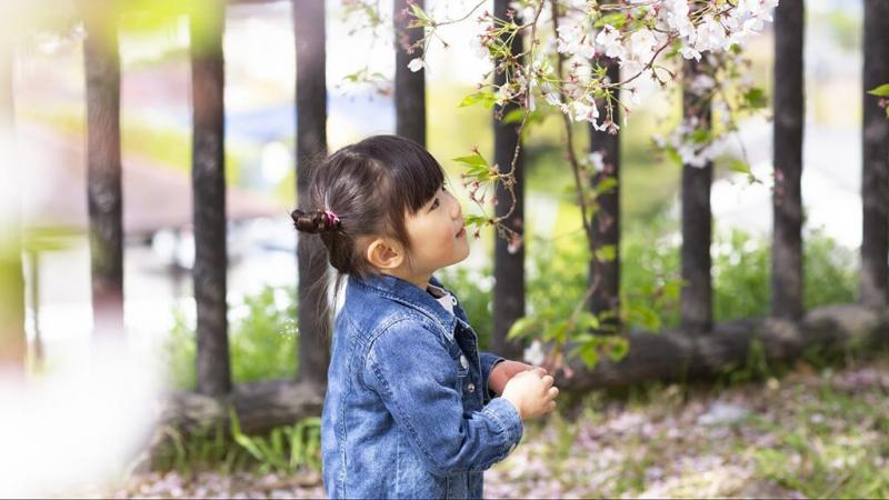 桜を見つめる女の子