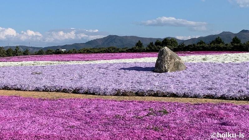 花畑の景色