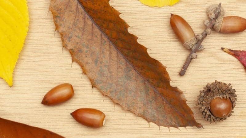 木の実や落ち葉