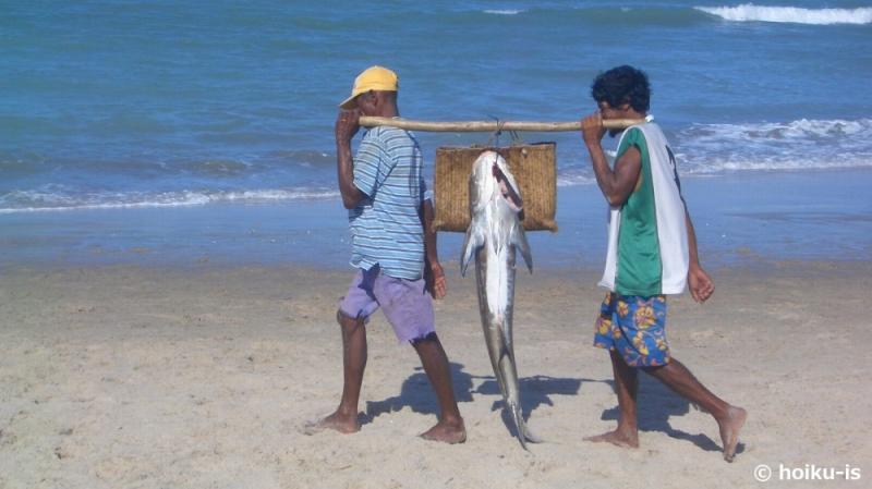 捕れた魚を運ぶブラジルの漁師たち