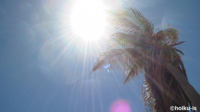 ヤシの木にそそぐ太陽の光