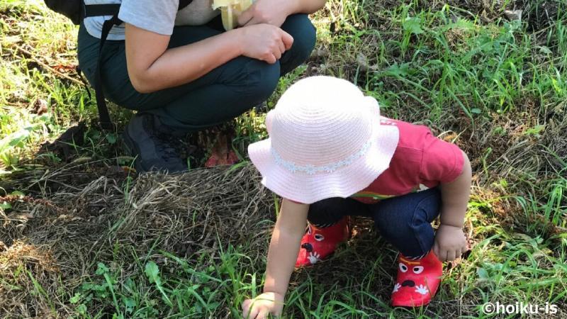 草を触る子ども